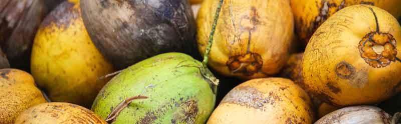 Die Stärken (und Schwächen) von Kokoswasser