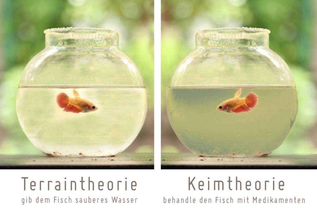 fisch im glas